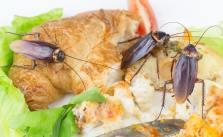 5d28063f6136b - El Súper alimento del futuro: La leche de Cucaracha