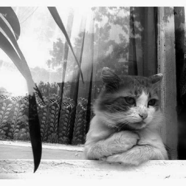 Toldo 1 - Toldo, el gato que visita a su amo en la tumba