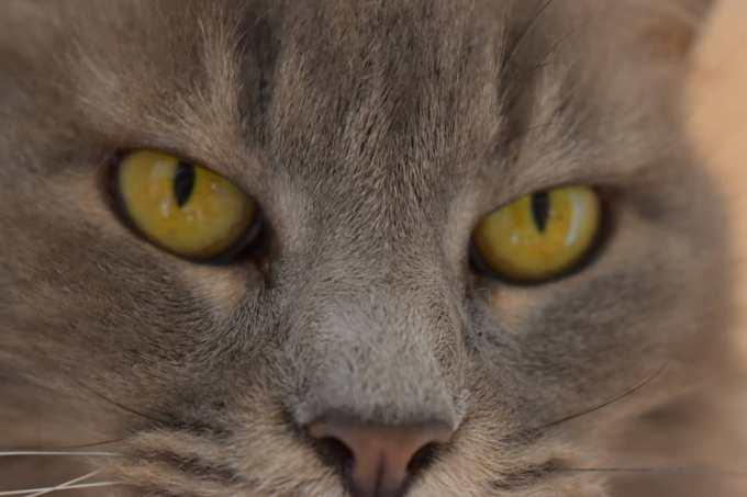Toldo 4 - Toldo, el gato que visita a su amo en la tumba