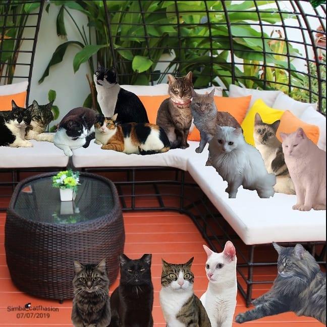 Toldo 5 - Toldo, el gato que visita a su amo en la tumba
