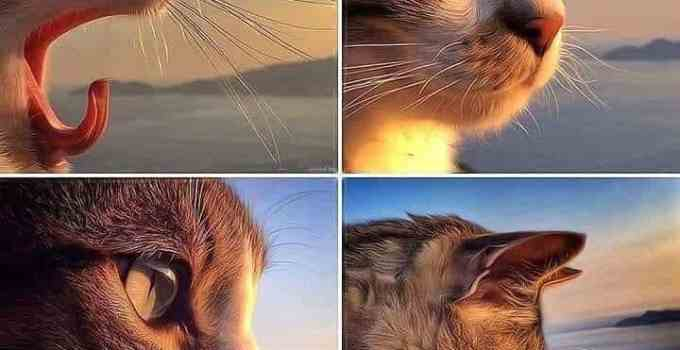 toldo 2 - Toldo, el gato que visita a su amo en la tumba