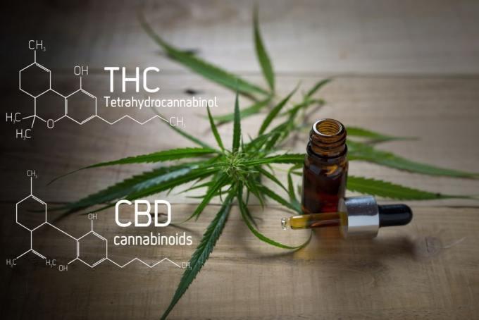 """Cannabis subproductos - Todo lo que tienes que saber sobre """"El Cannabis"""""""