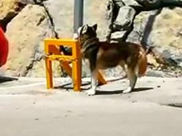 Perro atado a una farola en Arnedo