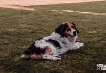 Luke, el perro más longevo de Arnedo en julio de 2020, en una foto del archivo familiar