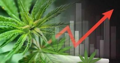 el atractivo de invertir en cannabis
