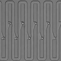 Árbol genealógico celular