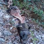 Aparece otro oso muerto en Moal, en Cangas del Narcea