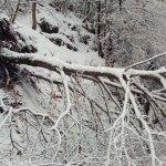 Medios municipales y contratados trabajan en Cangas del Narcea para solucionar los problemas de la nieve