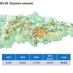 El Principado soltará 45.000 Torymus sinensis para luchar contra la avispilla del castaño