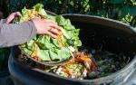 desperdicio comida madrid