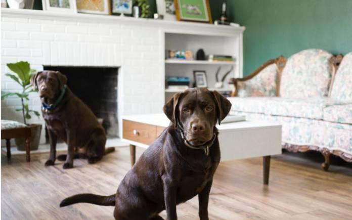 Intoxicación de las mascotas en el hogar
