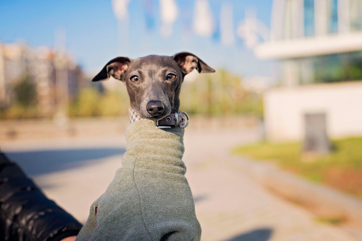 DSC_8419-2 Noticias de perros - Inicio