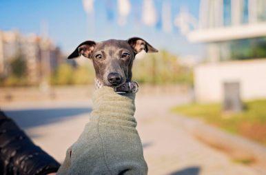 DSC_8419-2-386x254 Noticias de perros - Inicio