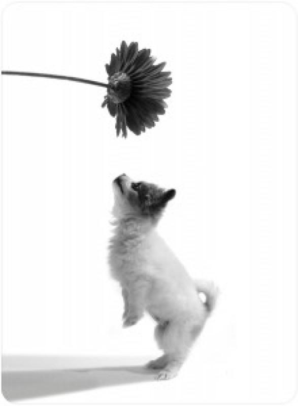 puppy cachorro