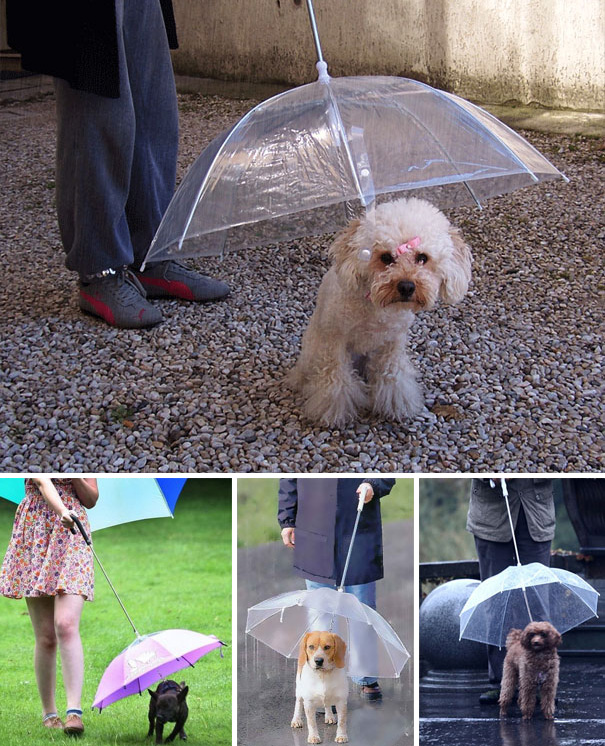 inventions-for-dog-lovers-10