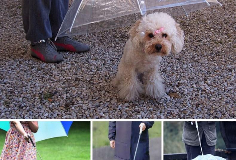inventions-for-dog-lovers-10-790x537 Noticias de perros - Inicio