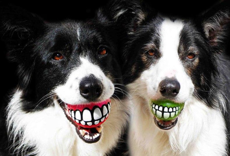 inventions-for-dog-lovers-22-1-790x537 Noticias de perros - Inicio