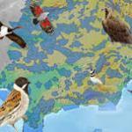 Dia Mundial de las Aves Salamanca 2015