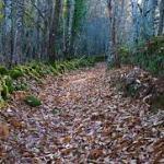 Los 4 paseos de Otoño simples en la Sierra de Francia
