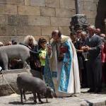 Subasta Cerdo de San Antón en la Alberca 2017