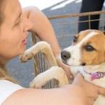 CABO FRIO – Praça Porto Rocha, em Cabo Frio, terá feira de adoção de cães e gatos
