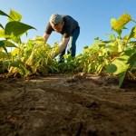 SÃO PEDRO DA ALDEIA TERÁ SEMANA DO AGRICULTOR