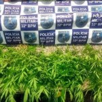 AÇÕES POLICIAIS – PM encontra plantação de maconha em sítio com estufa para o cultivo da planta em Macaé