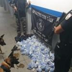 Operação apreende drogas, munições e R$ 10 mil em comunidades de Macaé e Casimiro de Abreu