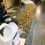 PM apreende 2 kg de maconha, pasta base de cocaína e balanças de precisão no bairro Estação