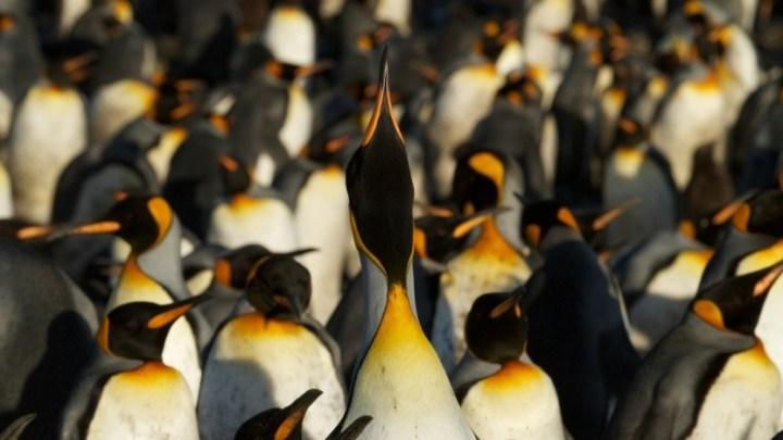 Desenvolvedores de kernel Linux não gostam da proteção do Specter v2