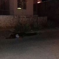 """Confirman la ejecución de """"El Gordo"""" en la colonia Diana Laura"""