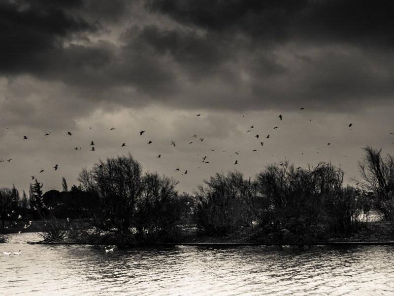 Lago Polvoranca, Observatorio de Aves