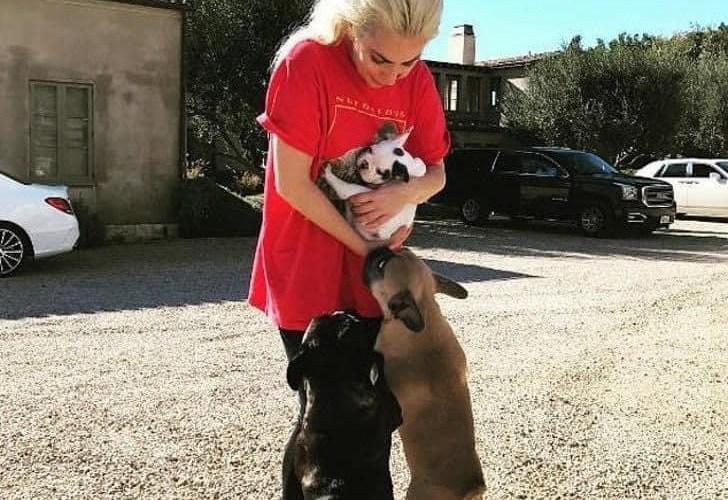 Lady Gaga recupera ilesos a sus dos perros