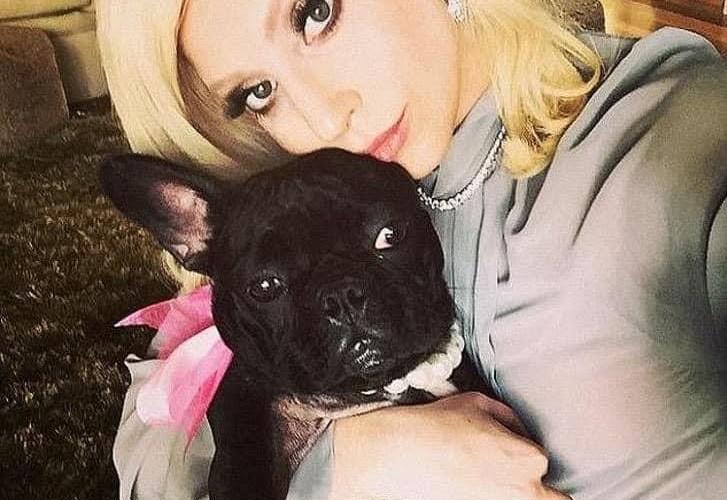 Lady Gaga ofrece $500,000 de recompensa por sus dos perros roba dos durante un asalto