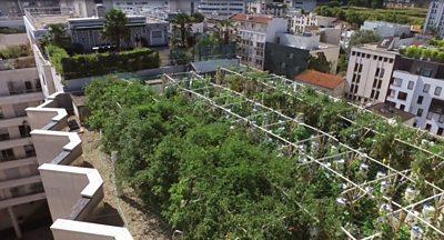 París: «La granja urbana en azoteas más grande del mundo» en marcha