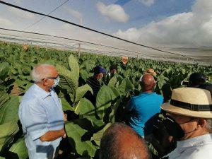 INTABACO realiza día de campo en la Estación experimental Quin Díaz de Villa González