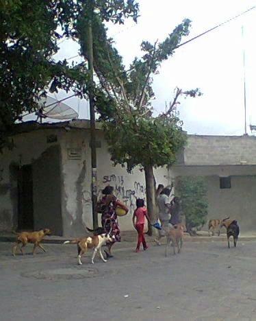 Proliferan perros callejeros en Altepexi