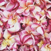 Güiechachi, la flor de mayo