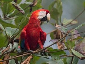 México, foco rojo de especies en peligro de extinción