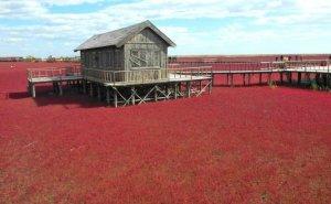 ¿Conoces la Playa Roja, que cambia de color en Otoño?