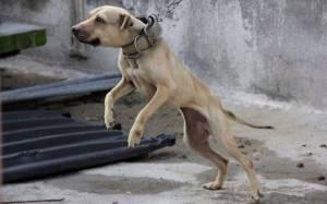 En Grecia, hasta 10 años de cárcel por maltrato animal