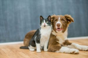 Los perros, más inteligentes que los gatos. La ciencia lo confirma