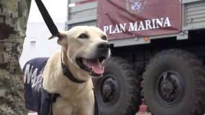 Perrito rescatado de inundación en Tabasco, ya pertenece a la Marina