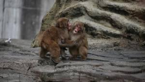 China informa de la primera muerte humana por virus del mono B