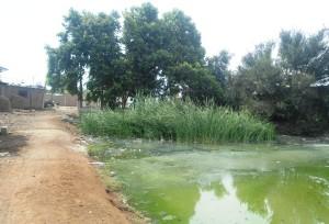 La imagen evidencia la situación de las pozas de oxidación al final de La Alameda, junto a las viviendas.