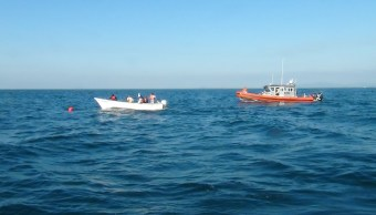 Marinos liberan a ballena atrapada en redes de pesca en Nayarit