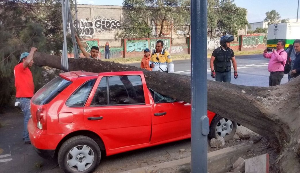 En el Eje 6 Sur y Río Churubusco, un árbol de 20 metros de altura cayó sobre un automóvil. (Twitter: @AGUCDMX)
