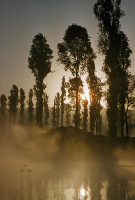 El sol se desliza a través de árboles y quema la niebla en Xochimilco (Getty Images)