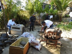 Asegura Profepa 180 ejemplares de vida silvestre en Acapulco (Profepa)