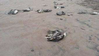 Aves muertas. (Archivo)